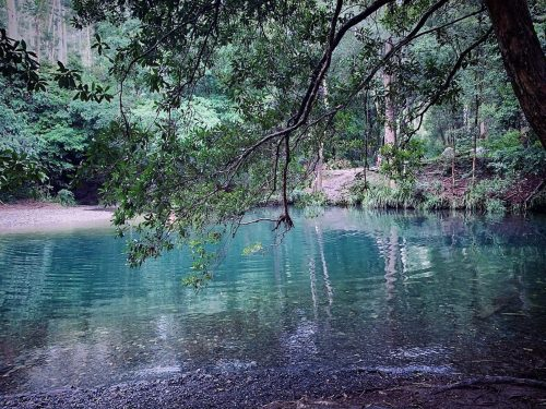 Bellingen Shire photo - forest swimming hole